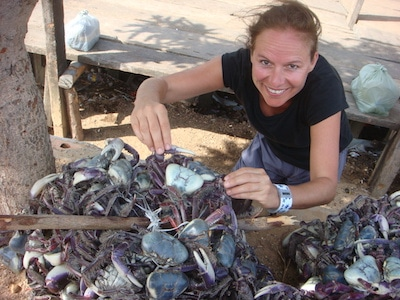 A photo of Marine Ecologist Karen Diele working with crabs