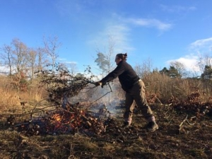 A colour photograph of a woman standing in heathland adding branches to a bonfire
