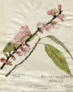 A watercolour illustration of pink flowers