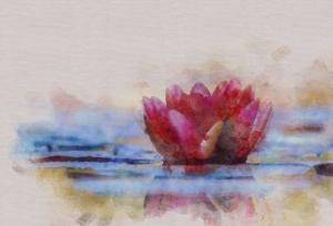 A watercolour painting of a pink waterlily on the water