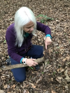 A colour photograph of a woman with white hair wearing blue trousers and a purple jumper kneeling down on the ground and pointing at what appears to be the roots of a small tree, which has been removed from the ground and she is holding with the other hand. She has a pair of glasses handing around her neck and is wearing walking shoes. The ground is covered in brown leaves.